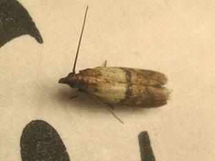Indian meal moth on dog food bag.